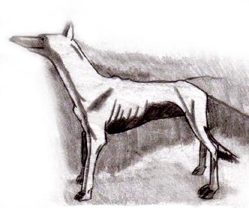 Egypt Dog
