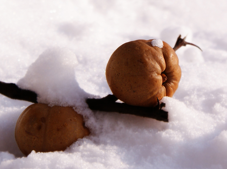 Fruits in the Snow